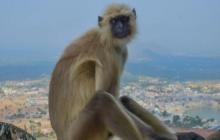 ट्रम्प आइपुगे भारतमा , सुरक्षाका लागि खटाइए पाँच लङ्गुर
