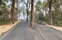 हुलाकी राजमार्गमा रुख कटान शुरु