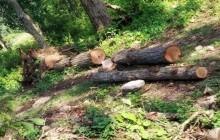 सुपर आँखुखोला जलविद्युत निर्माणको नाममा अवैध वन फँडानी